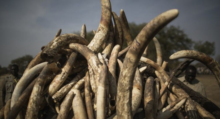 CHAD-ENVIRONMENT-IVORY-ANIMALS-TRAFFICKING